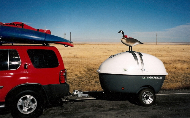 goose-on-the-lookout.jpg