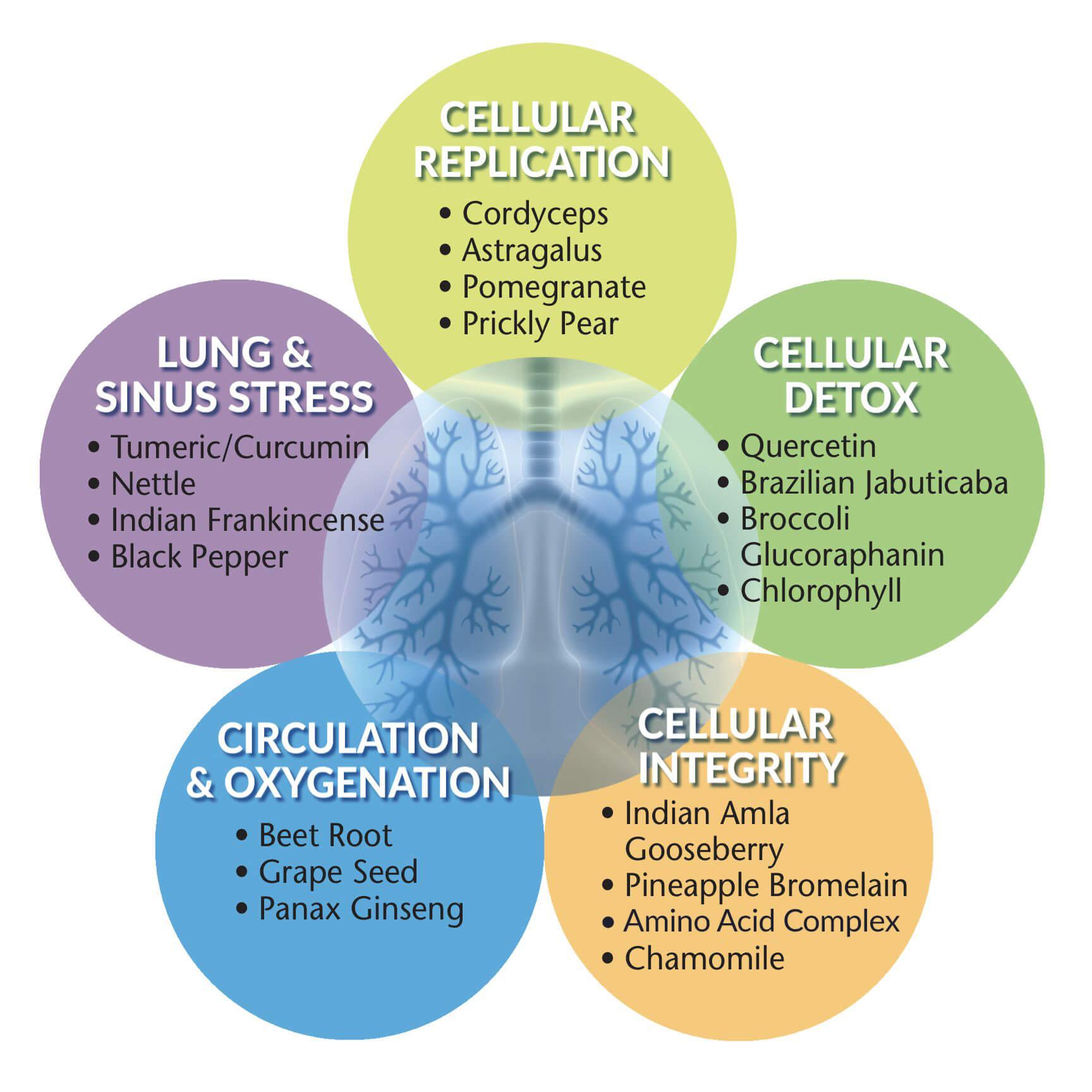 lung-sinus-lg-ehq-rev.jpg