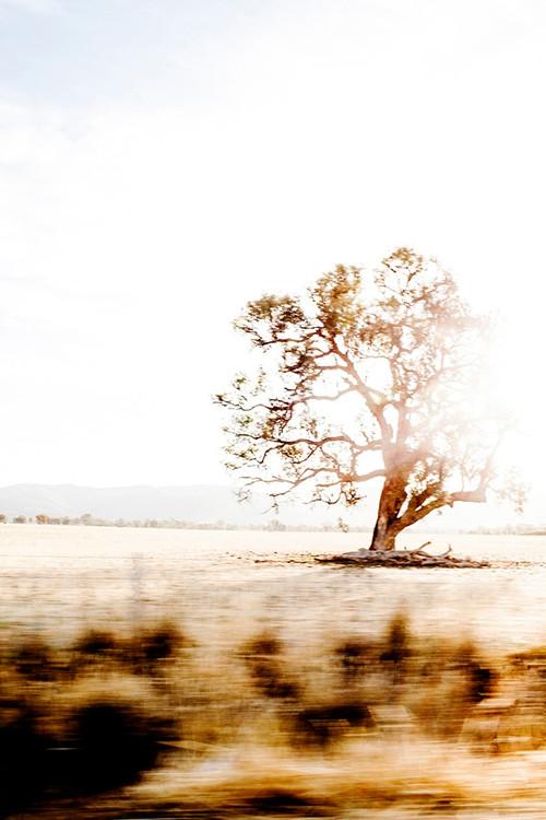 x1https://cdn10.bigcommerce.com/s-b76sgj/products/112/images/8154/Australian_Roadtrip_44x66_V4__66736.1624841081.1280.1280.jpgx2