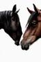 x1https://cdn10.bigcommerce.com/s-b76sgj/products/80/images/6300/Wild_Horses_001_Small__90536.1575333086.1280.1280.jpgx2
