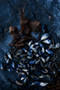 x1https://cdn10.bigcommerce.com/s-b76sgj/products/823/images/5811/Mussels_on_rockshelf_013_Vertical_XL__80914.1568168194.1280.1280.jpgx2