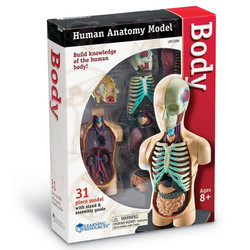 Learning Resources Human Body Anatomy Model Measures 11cm 3336