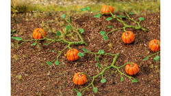FALLER Pumpkins (6) HO Gauge Scenics 181258