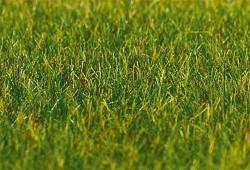 FALLER Dark Green Grass 6mm Premium Ground Cover Fibres (30g) HO Gauge 180485