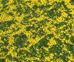 FALLER Rape Field Landscape Segment 210x148x6mm HO Gauge 180463