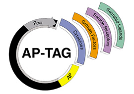 AP-TAG Vectors image