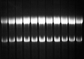 RNA Loading Mix