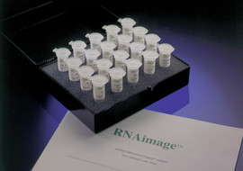 RNAimage DD Kits (for standard Differential Display)