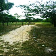 Bacab Grassy Path