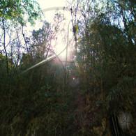 Caves Branch Sun through Trees