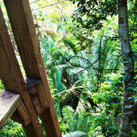 Belize Zip Line Tower Look Down