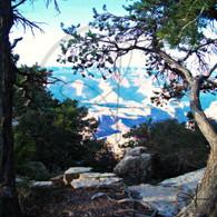 Grand Canyon through Trees