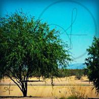 Mesa Desert Tree
