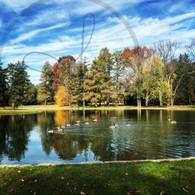 Autumn Geese on Starker 5x7