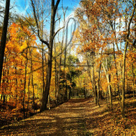 Crapo Park Trail View