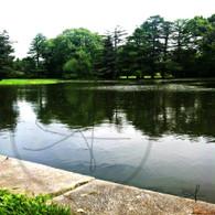 Lake Starker Edge View