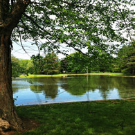 Lake Starker Trees Reflection