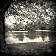 Lake Starker Trees Reflection BW