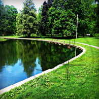 Geese on Lake Starker