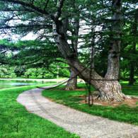 Crapo Park Trees Path Curve