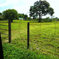 Belize Grassland and Fencing