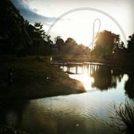 Sand Hill Sunset over Pond