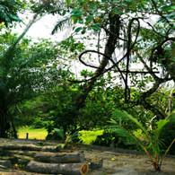 Belize Howler Monkey Walk View