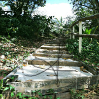 Belize Howler Monkey Walk Stairs