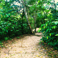 Belize Howler Monkey Path into Jungle