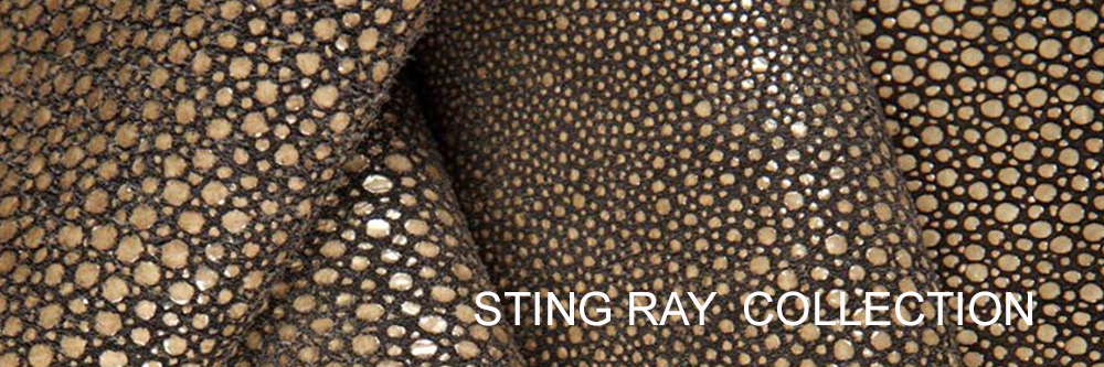 sting-ray.jpg