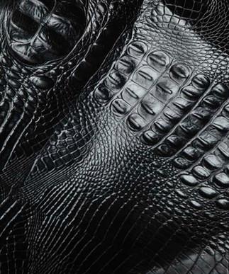 Italian Hornback Black