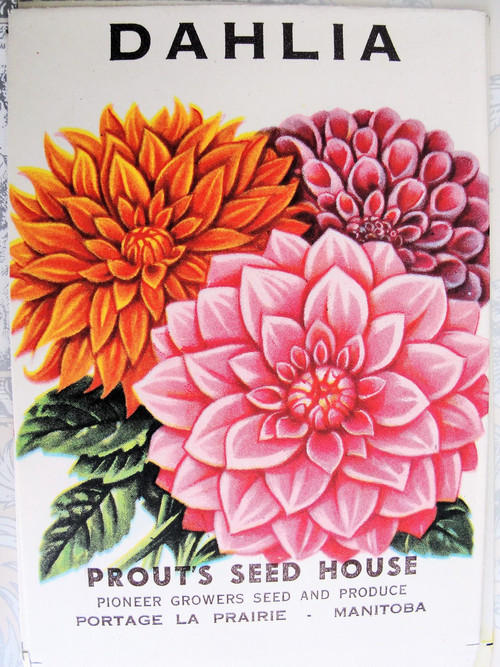 Vintage Seed Packet Dahlia Flowers