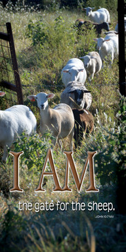 Church Banner featuring Sheep/Narrow Gate with I Am the Gate for the Sheep Theme
