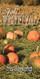 Church Banner featuring Pumpkin Field with Fall Festival Theme