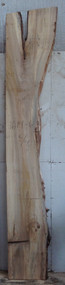 Elm, Spalted, Single Live Edge, Crotch, Boards
