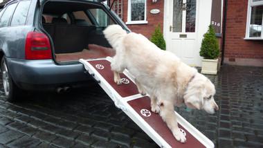 Jetmarine Pet Ramp - In Use