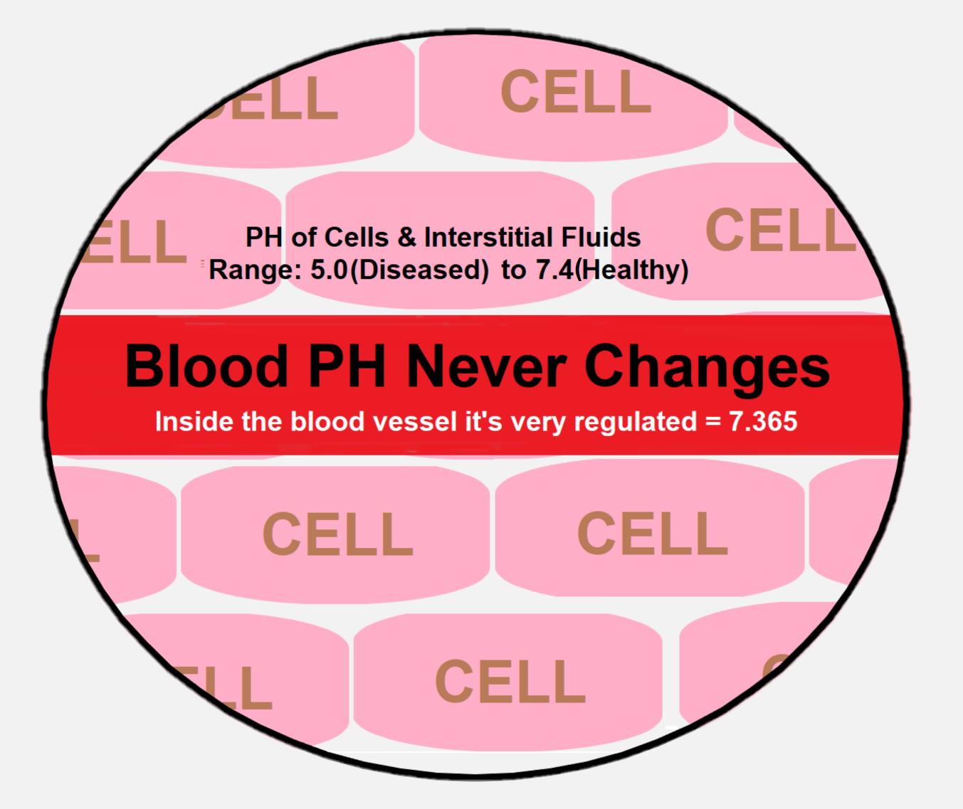 blood-ph-ranges.png