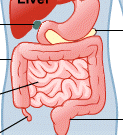 intestines-stomach-lg.png
