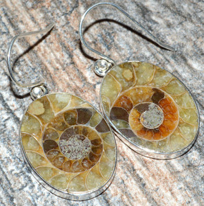 Ammonite 925 Sterling Silver Earrings Jewelry JJ7505