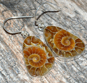 Ammonite 925 Sterling Silver Earrings Jewelry JJ7556