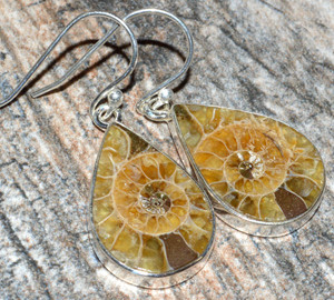 Ammonite 925 Sterling Silver Earrings Jewelry JJ7555