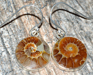 Ammonite 925 Sterling Silver Earrings Jewelry JJ7496