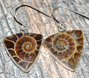Ammonite 925 Sterling Silver Earrings Jewelry JJ7500