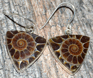 Ammonite 925 Sterling Silver Earrings Jewelry JJ7493