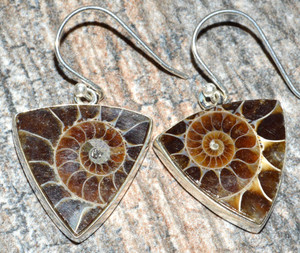 Ammonite 925 Sterling Silver Earrings Jewelry JJ7495