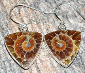 Ammonite 925 Sterling Silver Earrings Jewelry JJ7499