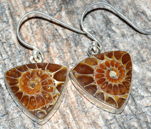 Ammonite 925 Sterling Silver Earrings Jewelry JJ7524