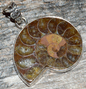 Ammonite 925 Sterling Silver Pendant Jewelry JJ10480