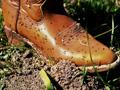 fireants-boot.jpg