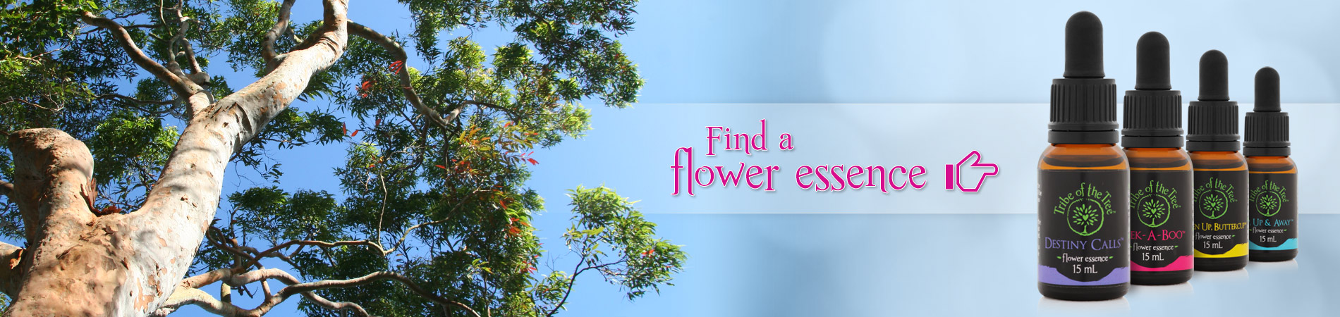 Find a flower essence from Tribe of the Tree's range of flower remedies for stress, shock, anxiety, confidence